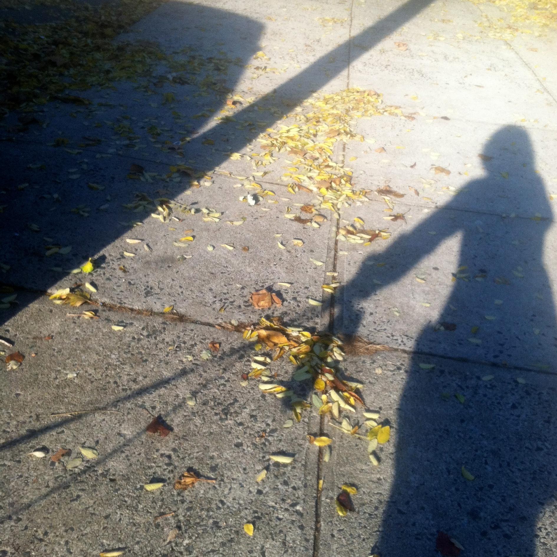 A brisk morning walk full of color!
